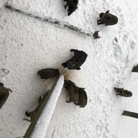 Radio Mainwelle Live aus dem Fichtelgebirge Wildpark Wildschweine.JPG